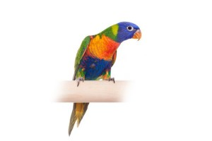 Exotic Pet Radiosurgery - Aston, PA